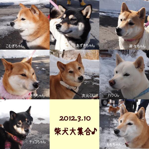 柴犬大集合!_a0104074_1650056.jpg