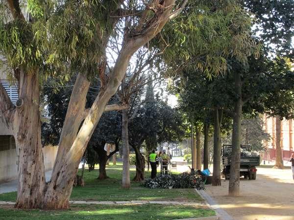 オリーブの木の剪定_b0064411_7125691.jpg
