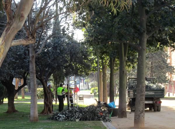 オリーブの木の剪定_b0064411_7131648.jpg