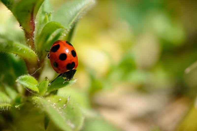 春を探しに洛西へ!テントウ虫_f0032011_19481761.jpg