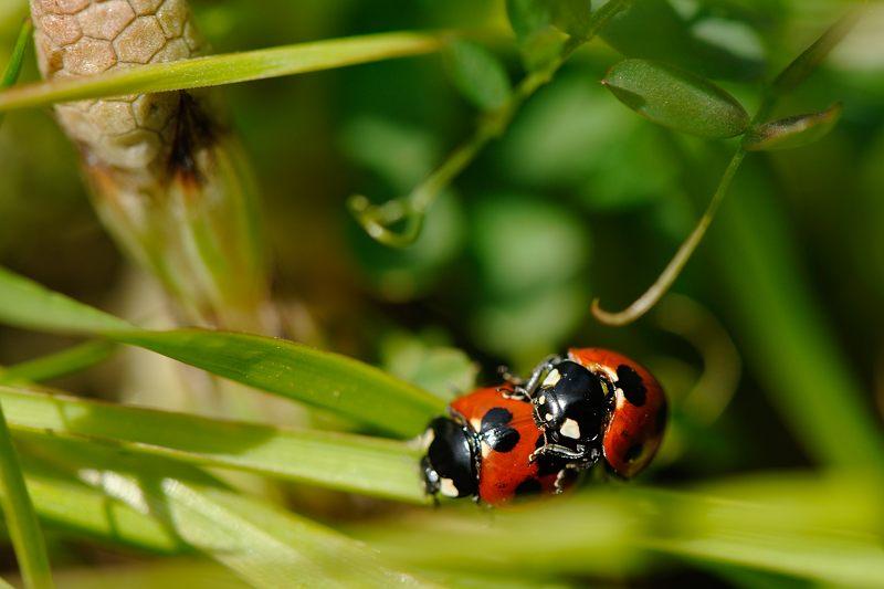 春を探しに洛西へ!テントウ虫_f0032011_19483644.jpg