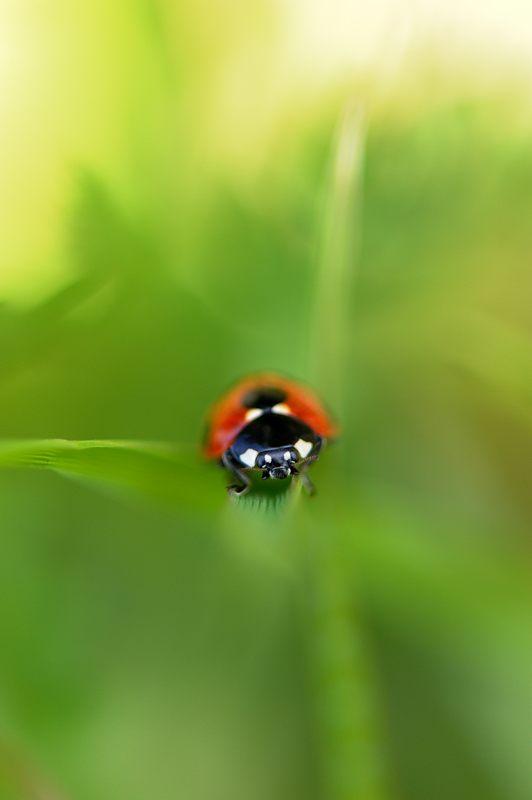 春を探しに洛西へ!テントウ虫_f0032011_1948827.jpg