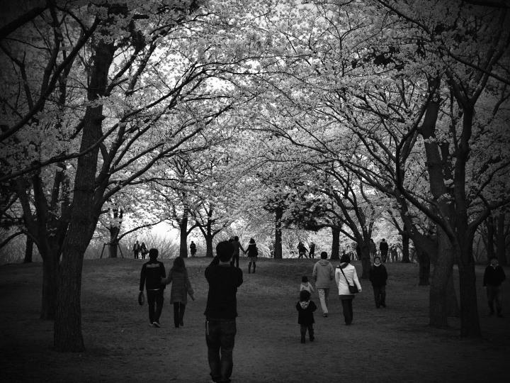 いつか見た春_e0169421_22321787.jpg