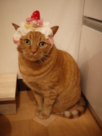 苺ショートケーキごはん猫 しぇる編。_a0143140_2339146.jpg
