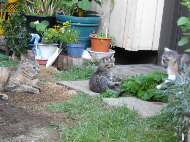 猫って1年でこんなになるんです_d0116059_10494985.jpg