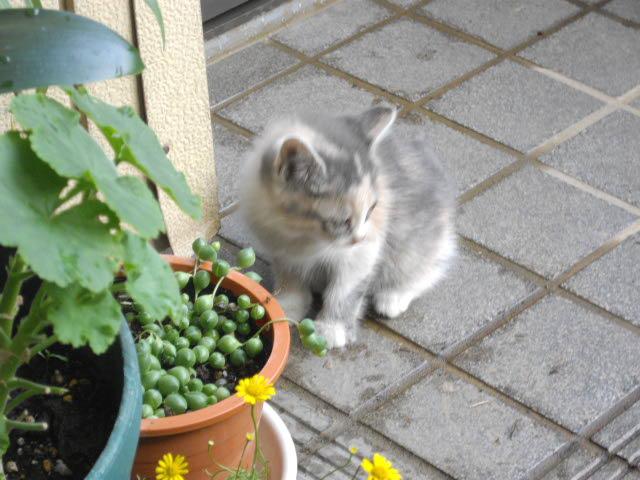 猫って1年でこんなになるんです_d0116059_10501137.jpg