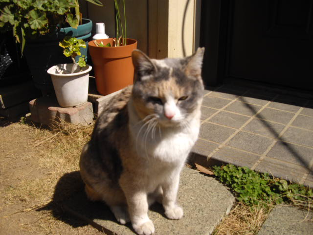 猫って1年でこんなになるんです_d0116059_10542151.jpg