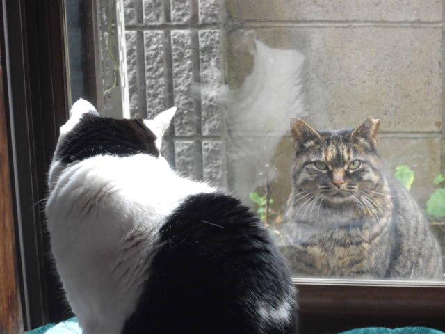 猫って1年でこんなになるんです_d0116059_10581829.jpg