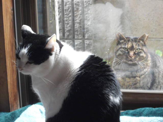 猫って1年でこんなになるんです_d0116059_10594221.jpg