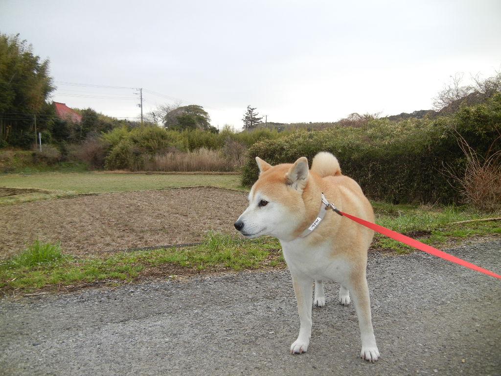 2012年3月22日(木)春うらら~~~♪_f0060461_1123687.jpg