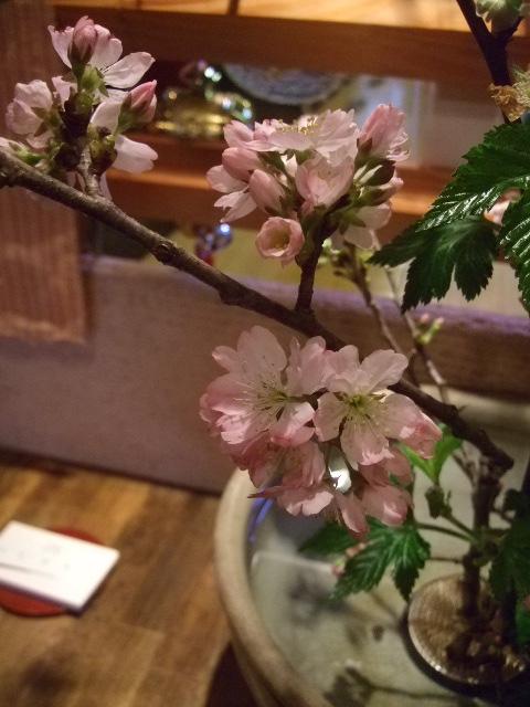 オークリーフ(吉川桜)_f0049672_13501479.jpg