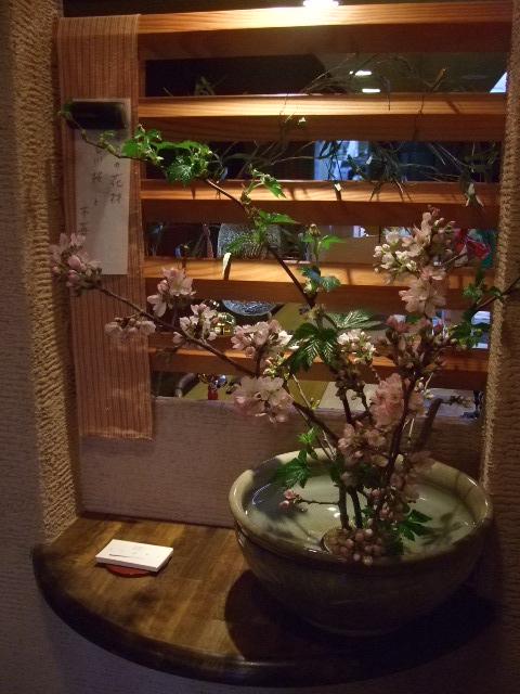 オークリーフ(吉川桜)_f0049672_13512038.jpg