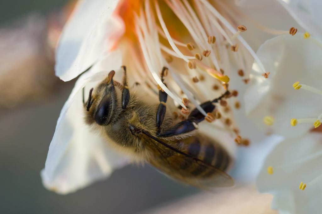 「梅とミツバチ」_a0133692_010585.jpg