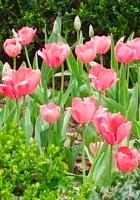 すっかり春らしくなったニューヨークの公園風景_b0007805_226301.jpg