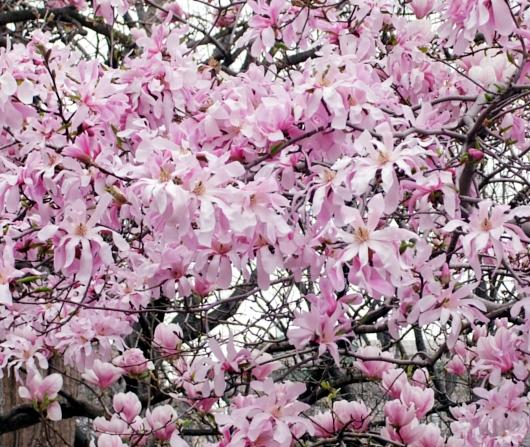 すっかり春らしくなったニューヨークの公園風景_b0007805_2265519.jpg