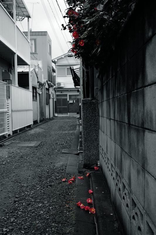 椿 侘び寂_f0032011_2082754.jpg