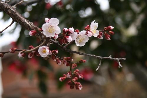 春が急ぎ足で来た。。。_d0150720_11304759.jpg
