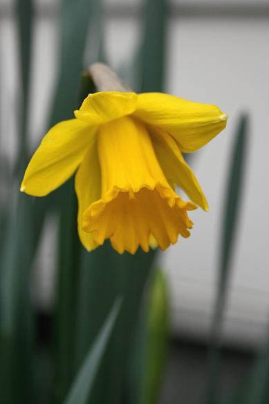 春が急ぎ足で来た。。。_d0150720_11313461.jpg