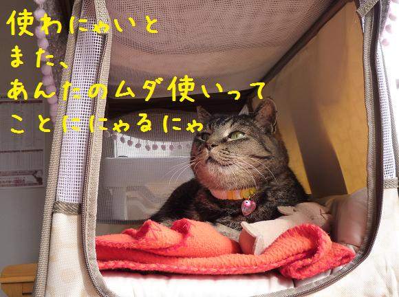 b0138430_10264255.jpg