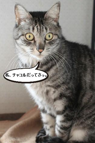 大人猫さんの3ニャン団子_e0151545_21295370.jpg