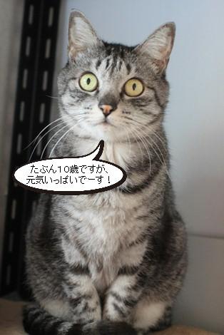 大人猫さんの3ニャン団子_e0151545_21313740.jpg