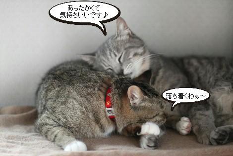 大人猫さんの3ニャン団子_e0151545_21353033.jpg