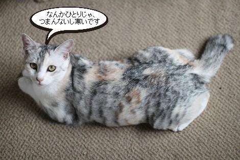 大人猫さんの3ニャン団子_e0151545_21363766.jpg