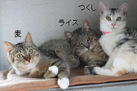 大人猫さんの3ニャン団子_e0151545_21374199.jpg