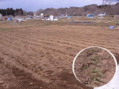 24年度農作業開始_c0063348_8185290.jpg