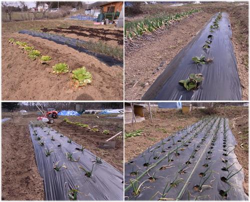 24年度農作業開始_c0063348_8185572.jpg