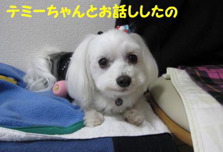 b0193480_1515931.jpg