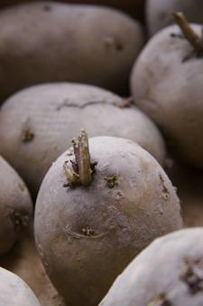 ジャガイモの芽が出ました♪_f0106597_16513716.jpg