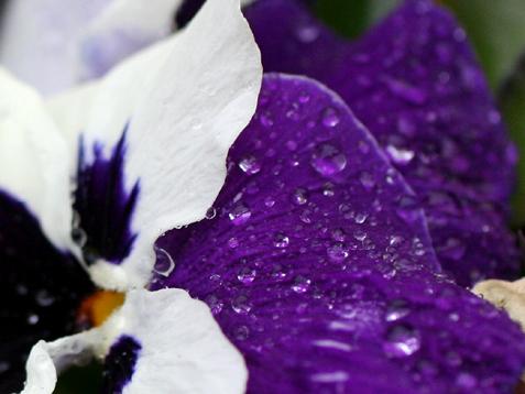 雨が降ってきました_c0140599_16354951.jpg