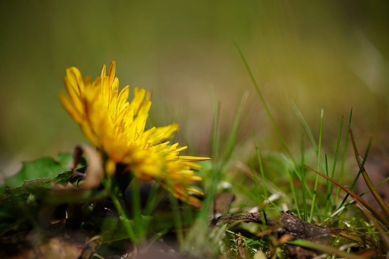 春色、色々_f0032011_1954686.jpg