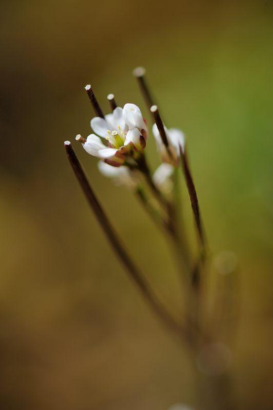 春色、色々_f0032011_196798.jpg