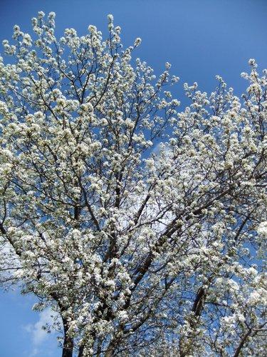 春爛漫_c0064534_7262762.jpg