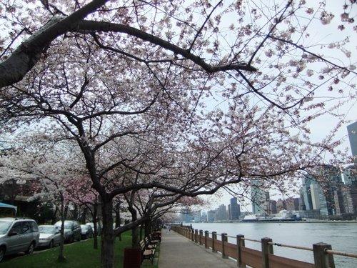 春爛漫_c0064534_7361971.jpg
