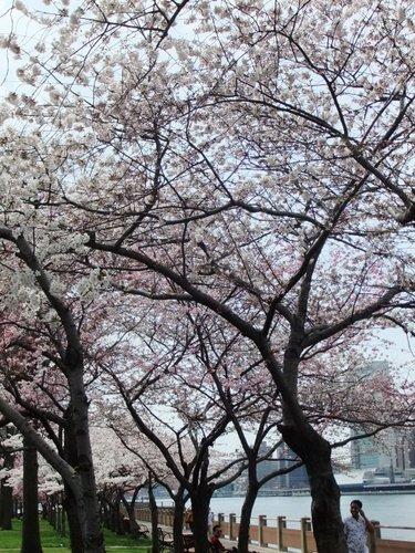 春爛漫_c0064534_7372456.jpg