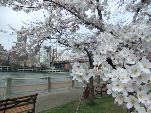 春爛漫_c0064534_7373940.jpg