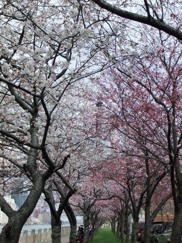 春爛漫_c0064534_7375669.jpg
