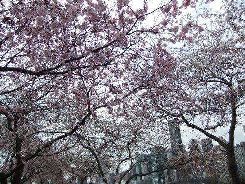 春爛漫_c0064534_7385228.jpg