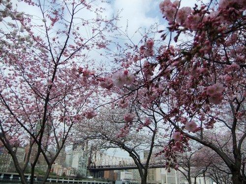 春爛漫_c0064534_739107.jpg