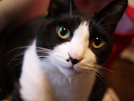 猫のお友だち ハナくん編。_a0143140_0392485.jpg
