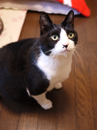 猫のお友だち ハナくん編。_a0143140_042404.jpg