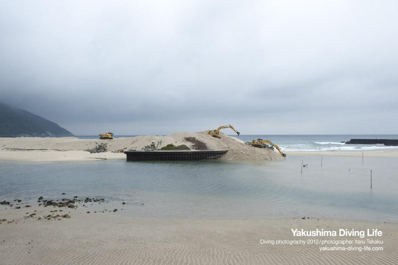 アカウミガメの雄と砂浜_b0186442_10281551.jpg