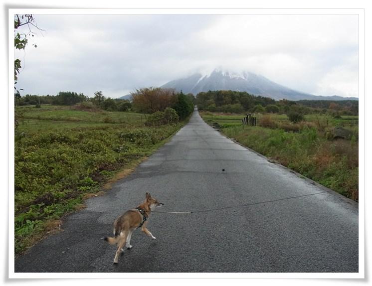 大山 - 初冬 -_b0025947_19544741.jpg