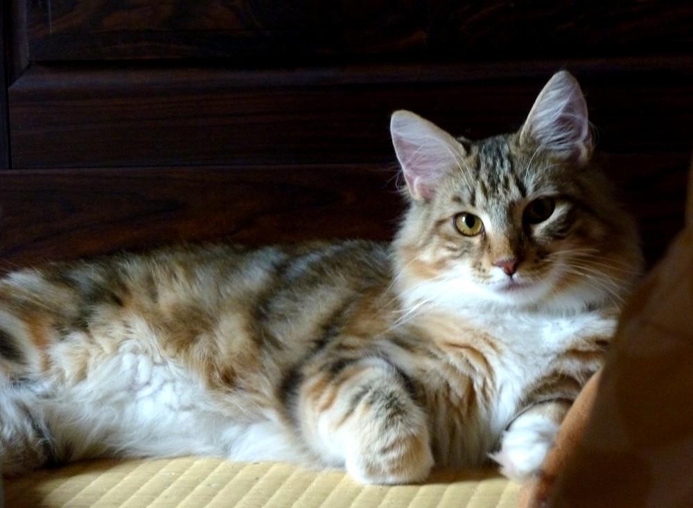 愛 猫_b0093754_2303974.jpg