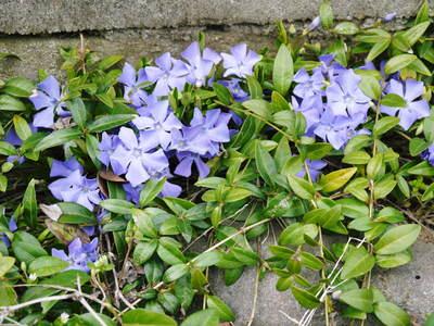 FLC日記 春の彩り・・・花_a0254656_10414090.jpg