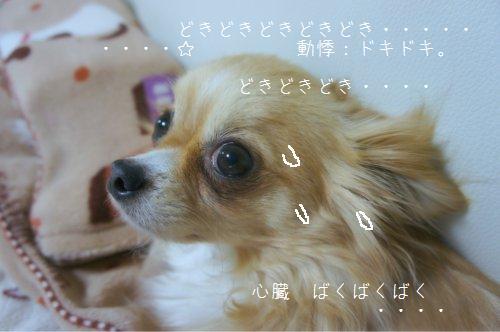 b0112758_16132184.jpg