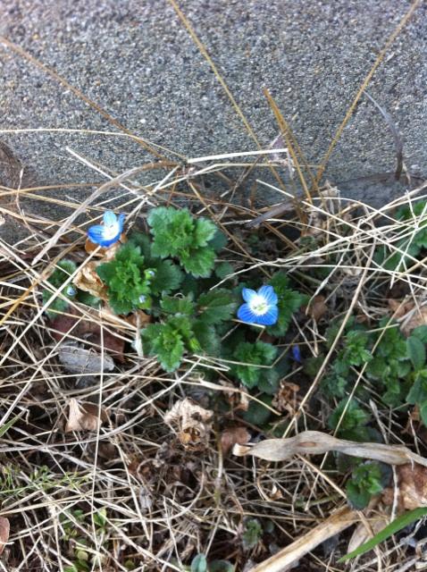 春の足音_a0252761_030958.jpg